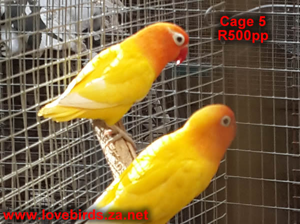 Cage 5